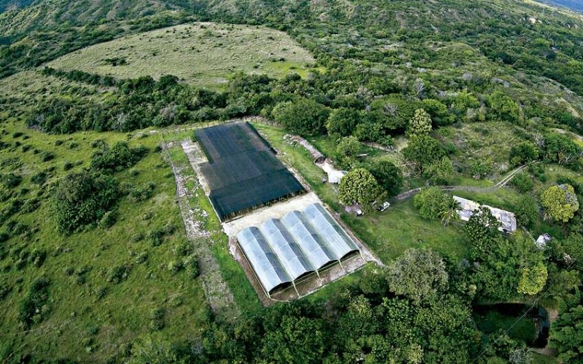 Enel-Emgesa presenta exitosos resultados del plan piloto de restauración ecológica en el Quimbo.