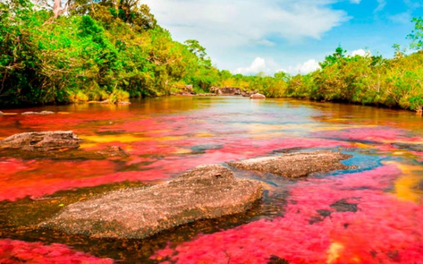 Francia destaca el liderazgo que Colombia ejerce en América Latina para la protección del medioambiente