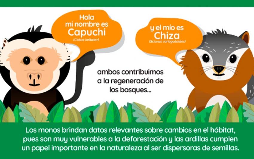 En Costa Rica: Sector eléctrico se une para proteger la fauna silvestre